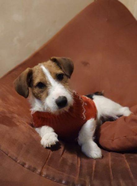 ROBY (chien) avec son manteau
